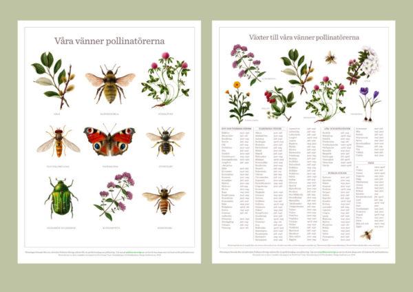 våra vänner pollinatörerna