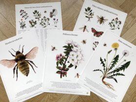 Pollinera Sverige Material 1